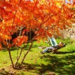 ...sous le soleil d'automne...