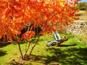 Profiter du soleil d'automne...